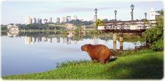 WTF!!!!! CURITIBA Brazil | ... , the world's greatest rodent, in the Barigui Park, in Curitiba
