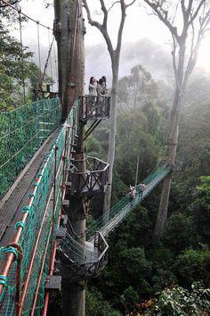 Walk all of the Borneo Rainforest Canopy Walkway in Borneo, Malaysia.