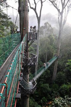 Walk all of the Borneo Rainforest Canopy Walkway in Borneo, Malaysia.
