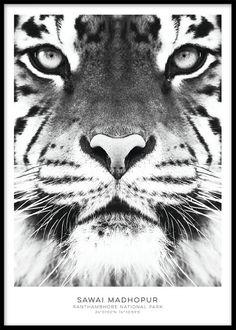 Svartvit tavla med tiger, fin till tavelvägg.