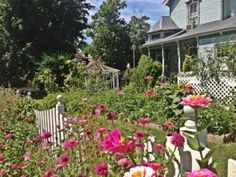 Amazing #Cottage #Garden in the front #yard of huge, purple #Victorian in Bell Buckle, #Tennessee ... #flowers #landscaping
