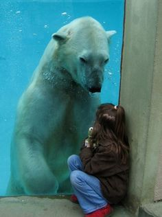 I'm telling you... polar bears totally have marketable skills