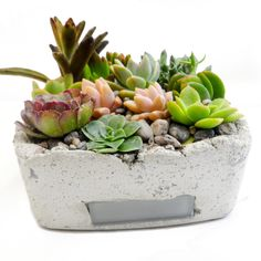 concrete succulent planter , I need to make one