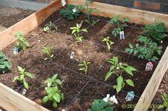 Recipe for a fruitful veggie garden