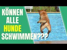 Wie bringe ich meinem Hund das Schwimmen bei? Tipps für vierbeinige Schwimmanfänger - YouTube Pets, Youtube, Cats, Pet Dogs, Summer Days, Vet Office, Swimming, Animales, Youtubers