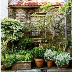 What is your favorite component of this composition? I love this image (via us2.campaign_ on Pinterest) on so many levels: aged stone wall backdrop, gray furry foliage, topiary forms, beautiful pots, rusty metal roof. With all of this visual interest, who needs flowers? #gardeninspiration #garden_style #gardendesign #instagarden #instagardenlover #stonewall #rustymetal #grayfoliage #topiary #agedpots #mediteranneangarden #droughttolerant #drygardening #gardenlife #gardenliving…