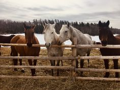 Curious girls🌷 #riding #ranch #farm #horses #mares #trailrides #spring #horsemanship Ranch Farm, Horses, Spring, Girls, Animals, Toddler Girls, Animales, Daughters, Animaux