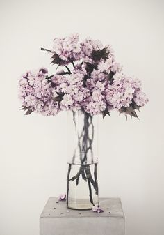 lilac-in-glass