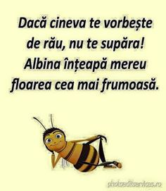 If someone talks bad about you, don't get upset! The bee always stings the most beautiful flower. Star Of The Week, Most Beautiful Flowers, Words Of Encouragement, True Words, Motto, Poetry, Maxime, Humor, Motivation