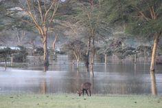 Lake Naivasha - Sanctuary Farm