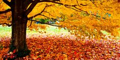 In Photos: The Best Fall Destinations (Besides New England)