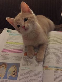 Post with 51 votes and 52 views. Shared by StoppedMyLurkingWays. Oh, were you reading this? Cute Baby Cats, Cute Little Animals, Kittens Cutest, Cats And Kittens, Ragdoll Kittens, Funny Kittens, Bengal Cats, White Kittens, Black Cats