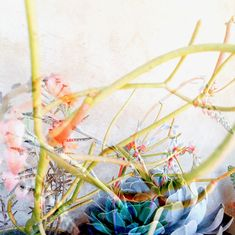 Miranda Crooks' double exposed botanicals feel like a half-formed memory. A hazy summer day with too many long hours...