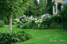 Landscaping with Hostas and Ferns | Hydrangeas, hostas, daylilies, phlox. There is also ferns in parts of ...