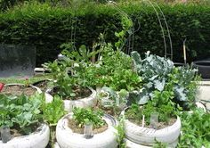 Barbados tyre garden: http://www.greenerideal.com/lifestyle/0509-how-green-is-barbados-in-2013/