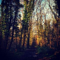 Paths, Woodland, River, Nature, Naturaleza, Pathways, Rivers, Outdoors, Mother Nature