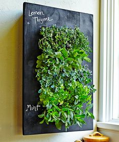 Small kitchen living wall with herbs - i've seen these planters, but with the chalkboard is super cool