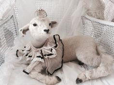 LAYAWAY Little lamb taxidermy vintage by Chambredecoeur on Etsy