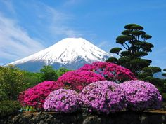 """No reason I love Mt. Please visit my board """"Mt. Fuji Our Pride"""". Cool Pictures Of Nature, Nature Photos, Mount Fuji Japan, Landscape Photography, Nature Photography, Fuji Mountain, Monte Fuji, Japanese Nature, Japon Tokyo"""