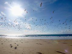 gaivotas (seagulls)