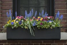 Here is a list of shade-loving and sun-loving plants and flowers for planting window boxes. Learn window box planting tips from The Old Farmer's Almanac. Window Box Plants, Window Box Flowers, Window Planter Boxes, Flower Boxes, Window Sill, Full Sun Flowers, Shade Flowers, Amazing Flowers, Long Planter Boxes