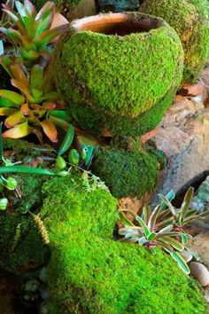 I CAN'T WAIT TO TRY THIS WITH MY DAUGHTER...SHE LOVES making smoothies..so she'll have fun and my garden will have character.!!DIY Moss for the Garden ~ how to