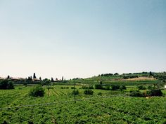 Blue and clean sky. Green vineyards. This is the summer in Valpolicella. Verona. Italy.