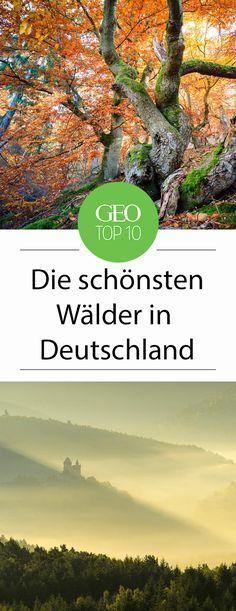 Die zehn schönsten Wälder Deutschlands, ausgesucht von der GEO-Online Redaktion.
