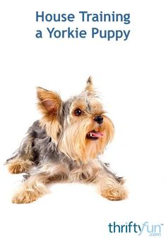 """""""House training a puppy is a necessary and sometimes trying part of pet ownership. The successful completion of this training is well worth the time invested. This is a guide about house training a Yorkie puppy. Yorkie Puppy, New Puppy, Dog Minding, Yorky, Puppy House, Puppy Biting, Easiest Dogs To Train, Yorkshire Terrier Puppies, Dog Training Tips"""