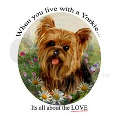 It should say, 'When you live with a Yorkie, it's all about THEM!' lol