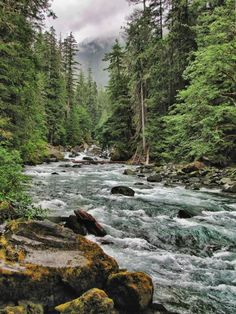 along the North Fork of the Skokomish River in Olympic National Park, Washington