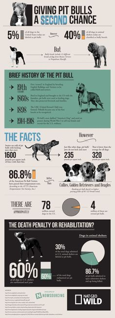 Info graphic created by http://www.nationalgeographic.com #pitbull, #pitbulls