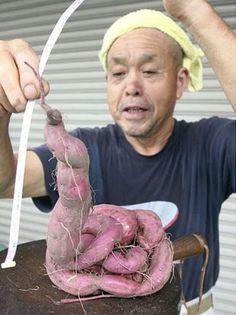 Frutas e vegetais mutantes de Fukushima no Japão