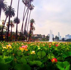 Gloomy morning at Echo Park Lake with DTLA in the background.