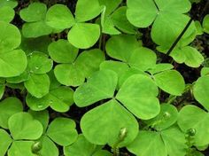 52 Wild Plants You Can Eat – http://www.wakingtimes.com/2013/08/03/52-wild-plants-you-can-eat/