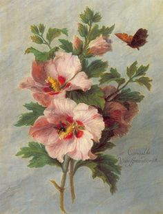 indigodreams:art-and-things-of-beauty:Corneille (Cornelis) van Spaendonck (1756-1839) - Hollyhocks.