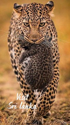Cute Wild Animals, Happy Animals, Animals And Pets, Funny Animals, Wild Animals Photos, Wild Animals Photography, Cat Photography, Beautiful Cats, Animals Beautiful