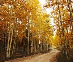 Lockett Meadow, Flagstaff, AZ // Hailey Golich Photography