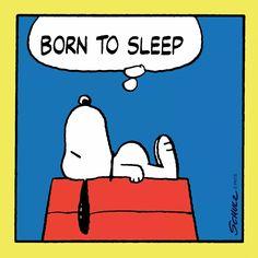 Born to sleep - Snoopy