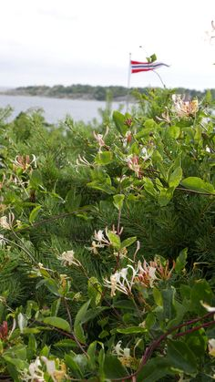 Seks kule klatreplanter du vil lykkes med - Tusenfryden My Secret Garden, Planter