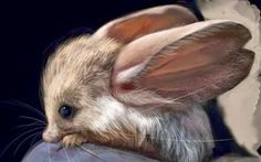 Nature Amazing # 15 - This is the Jerboa Pygmy, the cutest animal you meet in your life !!!