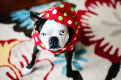 Adorable Christmas Pet Photography // decked out dog