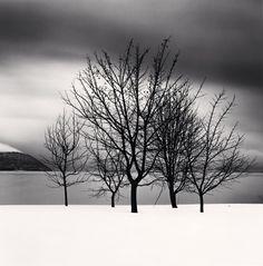 Five Trees, Toya Lake, Hokkaido, Japan, 2004 by Michael Kenna  #japan #photography
