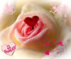 Valentijn Sassen