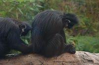 Praying Primates