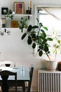 Plantas por perto | GAAYA arte e decoração