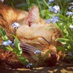 sendflowers-ua:  Крепкого и спокойного сна перед началом рабочей недели!
