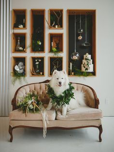 puppy with garland.  Florals by Confetti Floral Design.  Photograph by Rachel Barkman Photography.