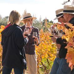 Na vinícula Nieto Senetiner você pode desfrutar de degustações em meio aos vinhedos.