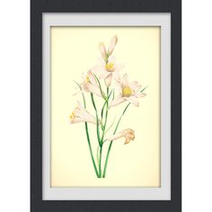 Botanical print, 32, a vibrant vintage botanical art print produced from a antique book plate.